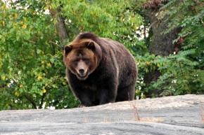 Cuando apareció este bicharraco por detrás de esa roca, aún sabiendo que era un zoológico me dió un susto que para qué