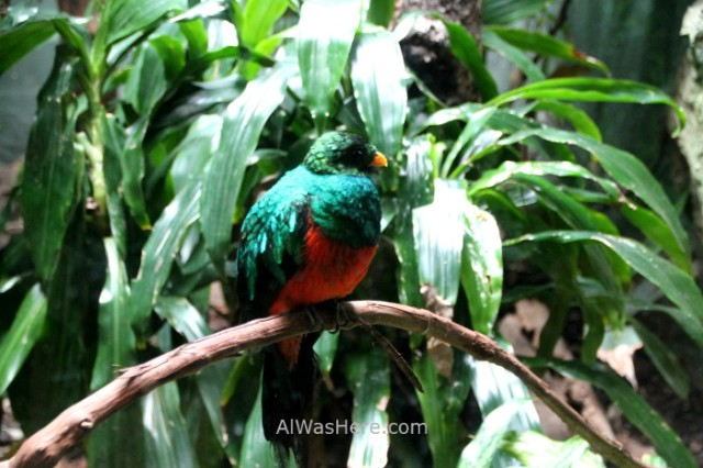 Nueva York Zoo del Bronx 2. Quetzal Ave Bird. New Bear