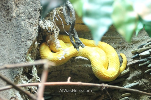 Nueva York Zoo del Bronx 4. Serpiente Snake. New