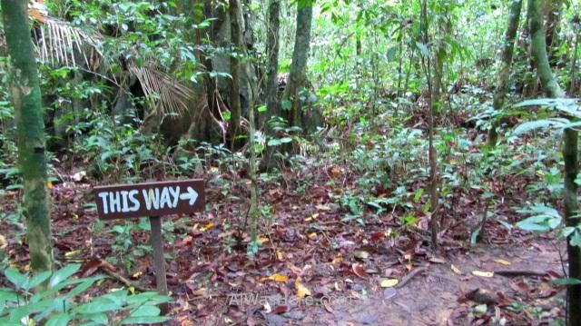 SABANG RIO SUBTERRANEO PUERTO PRINCESA 1. Jungle Trail. Underground River New 7 Wonders of Nature Maravillas Naturaleza, Palawan, Filipinas Philippines (3)