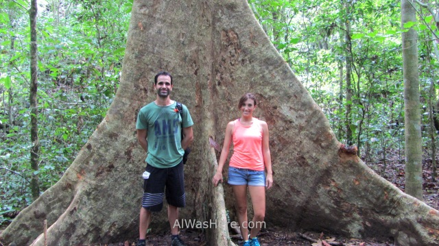 SABANG RIO SUBTERRANEO PUERTO PRINCESA 1. Jungle Trail. Underground River New 7 Wonders of Nature Maravillas Naturaleza, Palawan, Filipinas Philippines (4)
