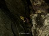 A veces es mejor no ver lo que hay; en la imagen, una serpiente acechando en una de las paredes de la cueva