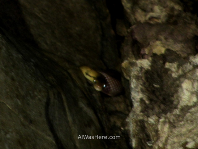 SABANG RIO SUBTERRANEO PUERTO PRINCESA 3. serpiente snake cueva. Underground River New 7 Wonders of Nature Maravillas Naturaleza, Palawan, Filipinas Philippines (4)