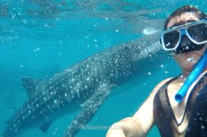 Muchas gracias a mi amiga Mireia por esta foto y la anterior, sin las cuales este artículo sería un auténtica catástrofe gráfica. Ella vio a los tiburones, pero en Oslob