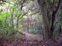 ... con otros parajes que son puro bosque. La imagen de cabecera de este artículo también es de este sendero