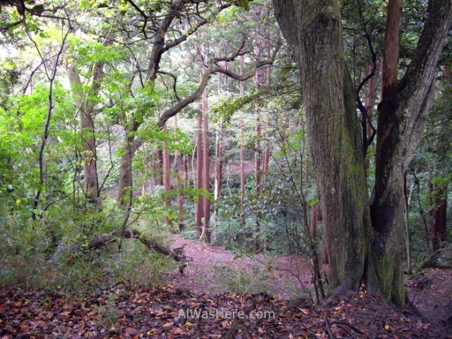 KAMAKURA INFORMACION 2. sendero daibutsu trail Japon Japan