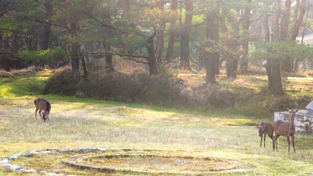Kirishima Parque Nacional 3. National Park Japon Japan Kyushu Ebino Kogen ciervos deers camping campsite