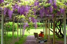 Un hombre pintando las flores en el jardín