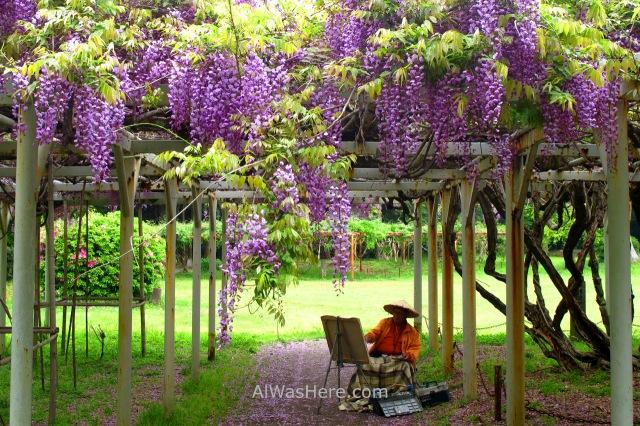 AOSHIMA 4. Jardin glicinias wisteria garden Isla Island templo temple shrine santuario Japan Japon Kyushu Miyazaki (2)