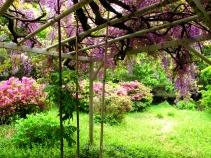 Hay un precioso jardín con espectaculares glicinias, aunque no tanto como las del Kawachi Fuji-en