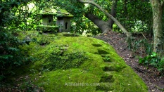 Rincón cubierto de musgo en el jardín Senganen, Kagoshima