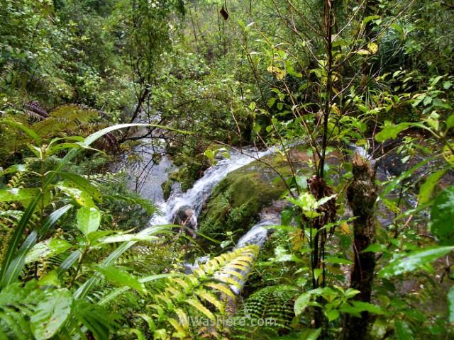 ABEL TASMAN NATIONAL PARK 1 Coastal Track parque nacional, Nueva Zelanda New Zealand