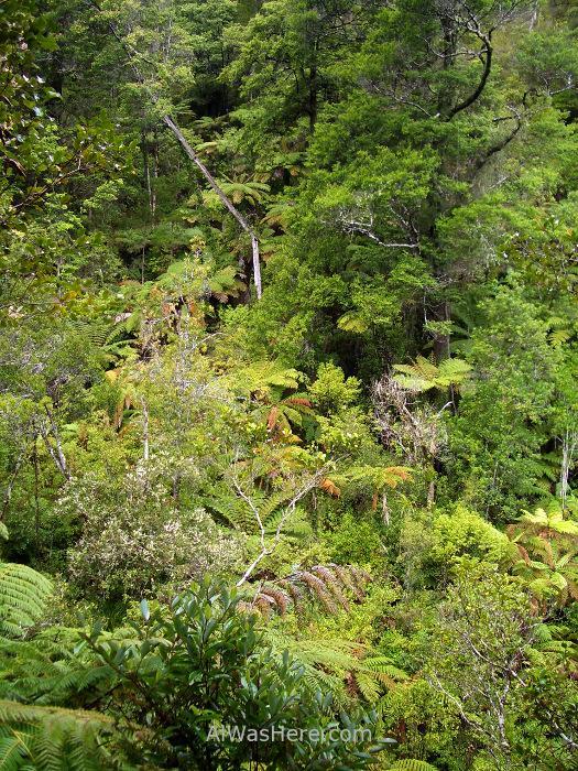 ABEL TASMAN NATIONAL PARK 2 Torrent Bay High Tide Track parque nacional, Nueva Zelanda New Zealand (5)