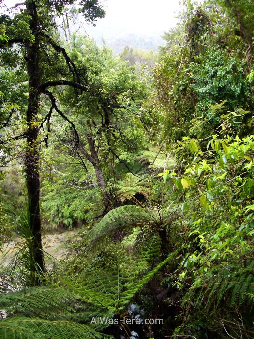ABEL TASMAN NATIONAL PARK 2 Torrent Bay High Tide Track parque nacional, Nueva Zelanda New Zealand (6)