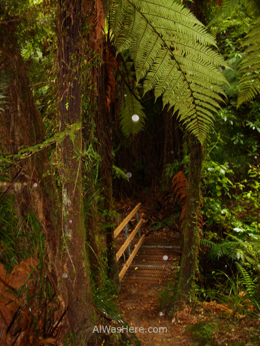 ABEL TASMAN NATIONAL PARK Inland Track Nueva Zelanda New Zealand (2)