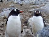 """Estos pingüinos parecen estar diciendo """"otro turista pesado con sus fotitos..."""""""