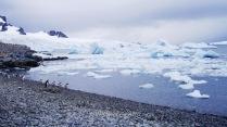 Icebergs y algunos pingüinos al llegar a la isla