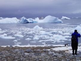 Icebergs, algunos pingüinos y nuestro barco al fondo