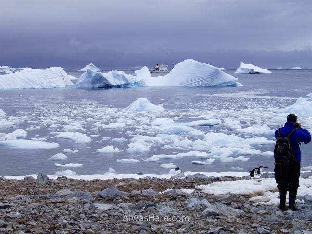 Antártida Cuverville Island Antarctica (4)