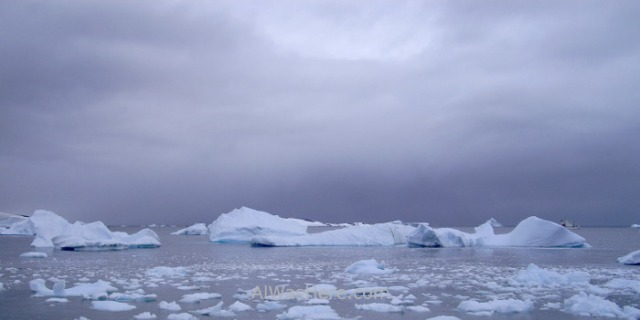 Antártida Cuverville Island Antarctica (6)