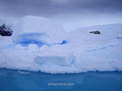 Otra foca de Weddell sobre un iceberg azul
