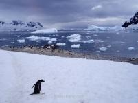 Puerto Neko, Antártida