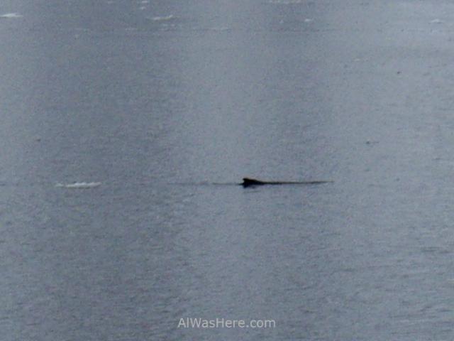 Antartida Puerto o Bahia Paraiso, Antarctica Paradise Bay Ballena jorobada Humpback whale