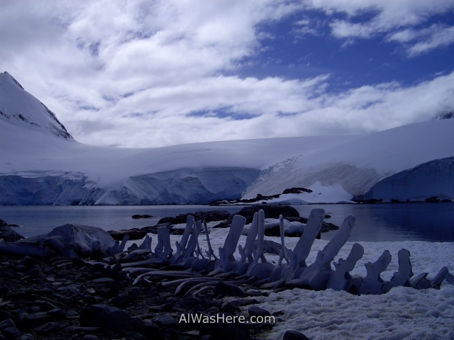 Antartida Port Lockroy Antarctica ballena whale